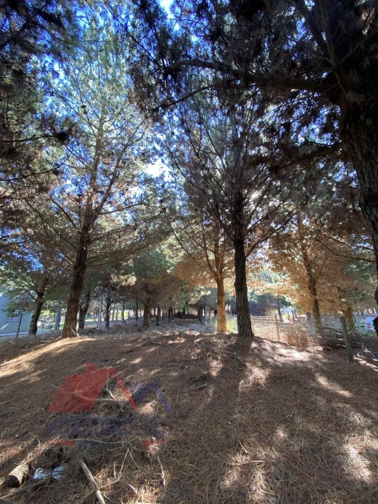 Morrongiello Propiedades - Santa Fe 1200